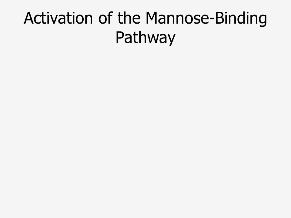 Activation of the Mannose-Binding Pathway