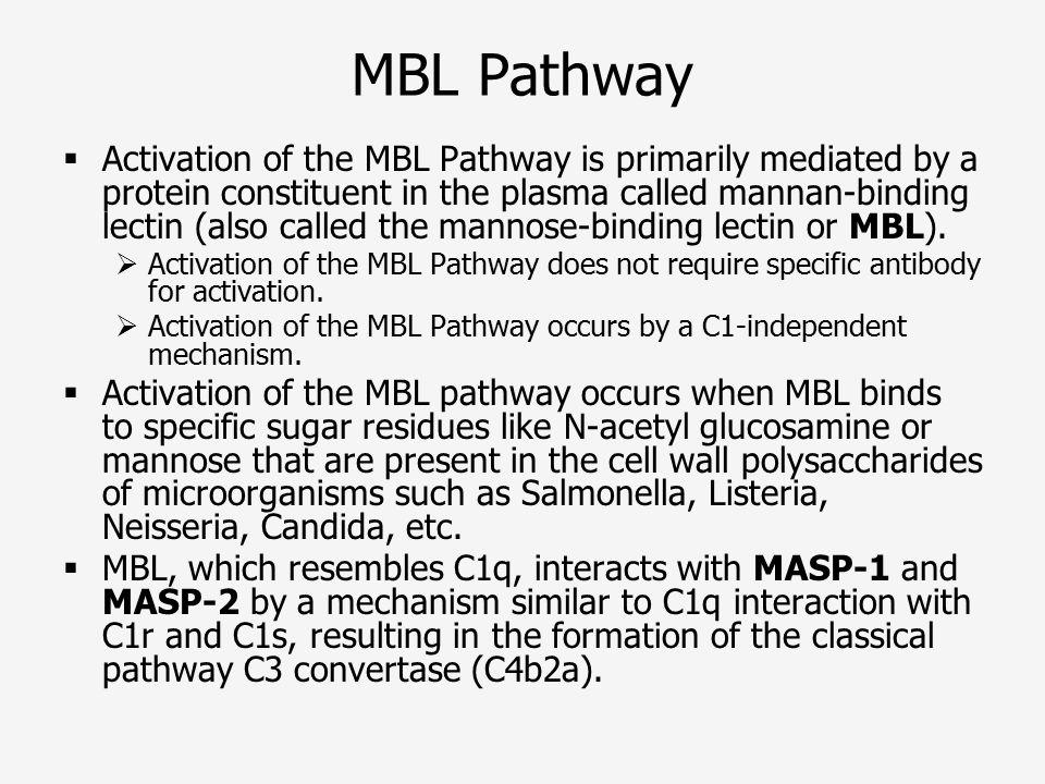 MBL Pathway