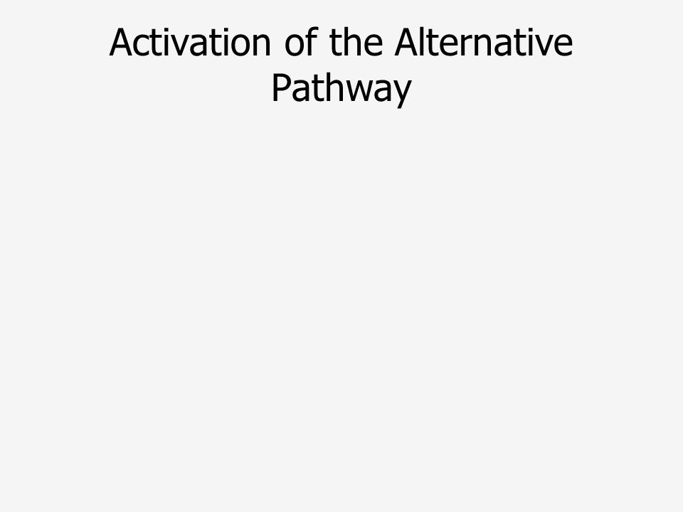 Activation of the Alternative Pathway
