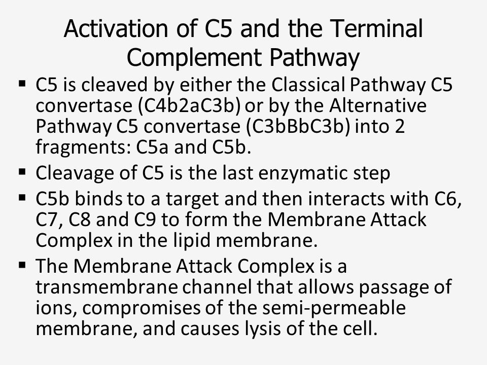 Activation of C5 and the Terminal Complement Pathway
