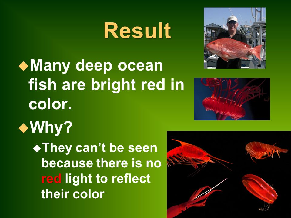 Result Many deep ocean fish are bright red in color. Why