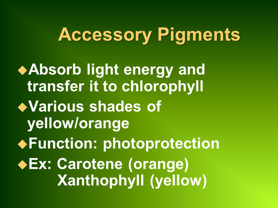 Accessory Pigments Absorb light energy and transfer it to chlorophyll