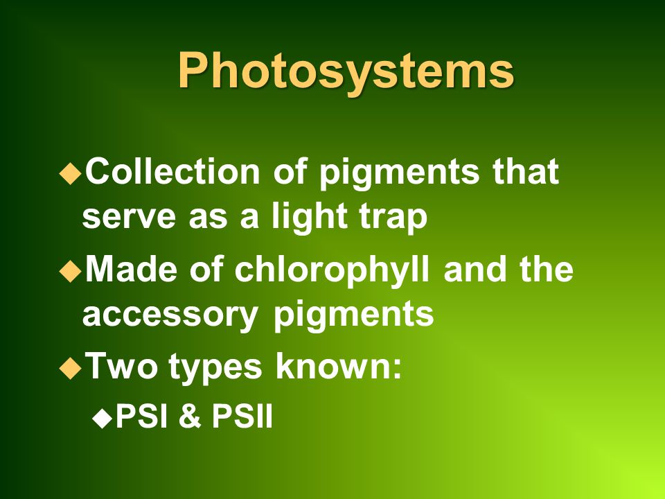 Photosystems Collection of pigments that serve as a light trap