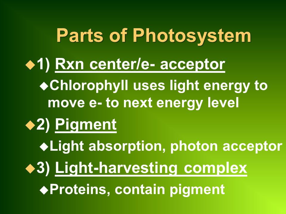 Parts of Photosystem 1) Rxn center/e- acceptor 2) Pigment