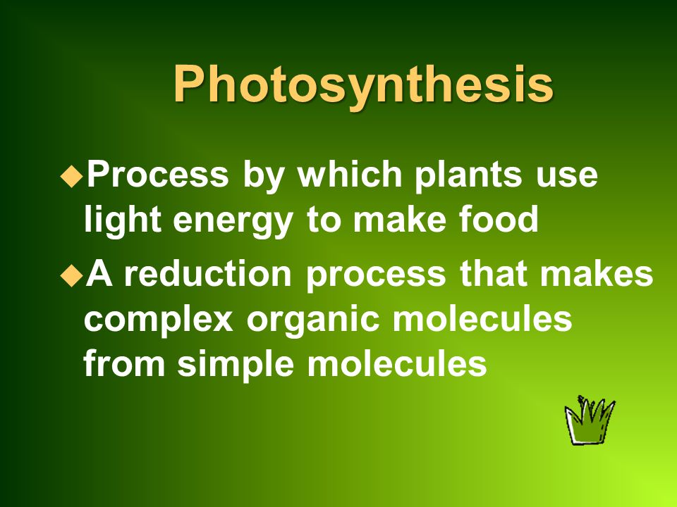 Photosynthesis Process by which plants use light energy to make food