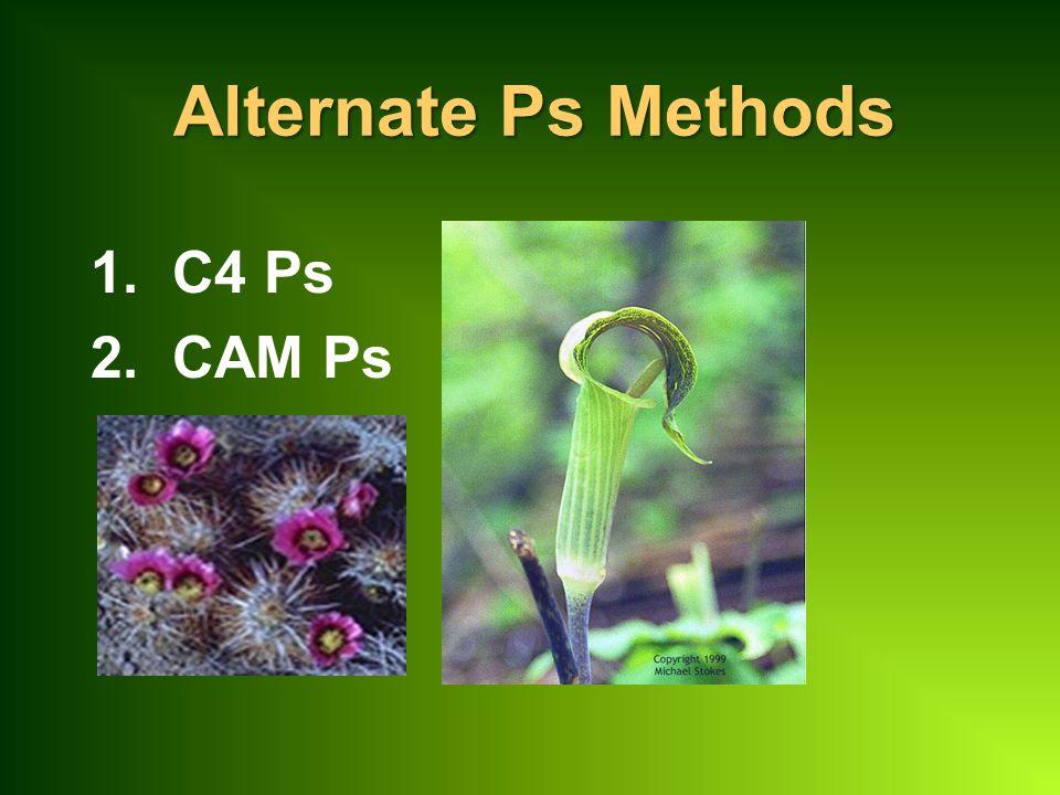 Alternate Ps Methods 1. C4 Ps 2. CAM Ps
