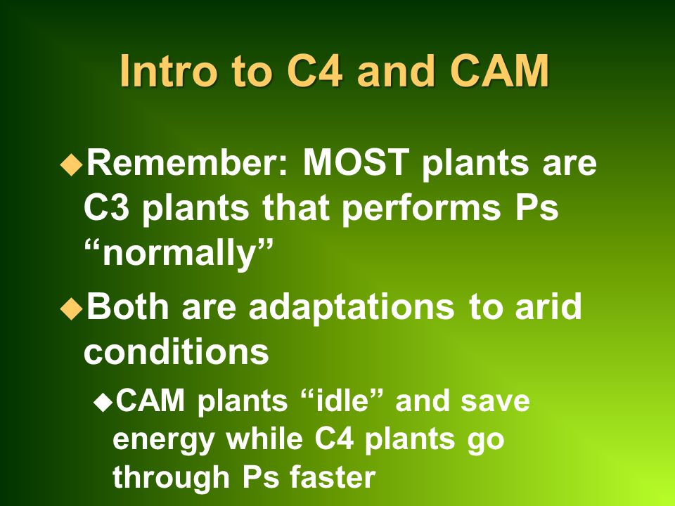 Intro to C4 and CAM Remember: MOST plants are C3 plants that performs Ps normally Both are adaptations to arid conditions.