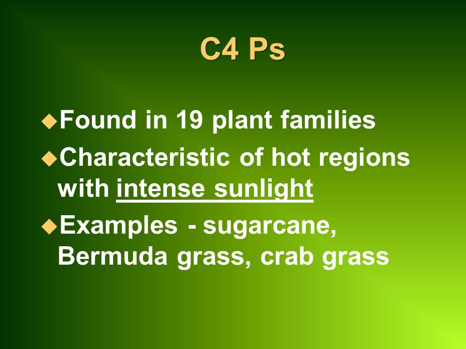 C4 Ps Found in 19 plant families