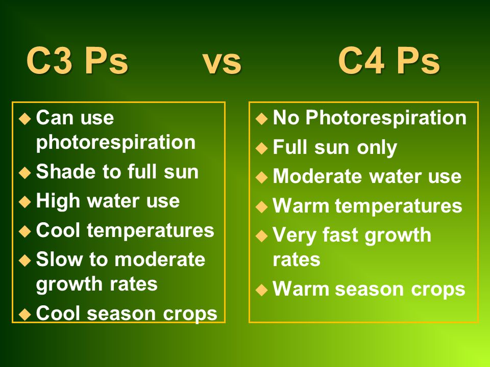 C3 Ps vs C4 Ps Can use photorespiration Shade to full sun