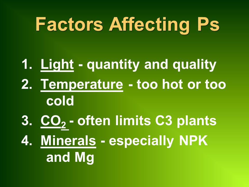 Factors Affecting Ps 1. Light - quantity and quality