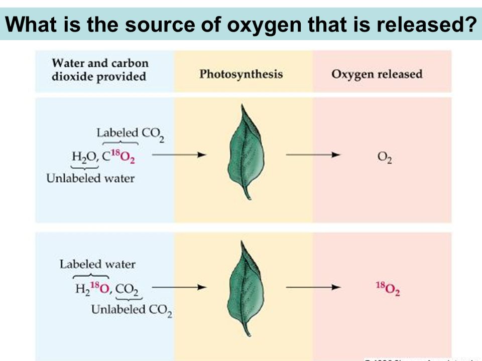 What is the source of oxygen that is released