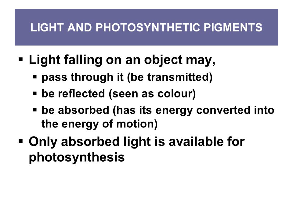 LIGHT AND PHOTOSYNTHETIC PIGMENTS