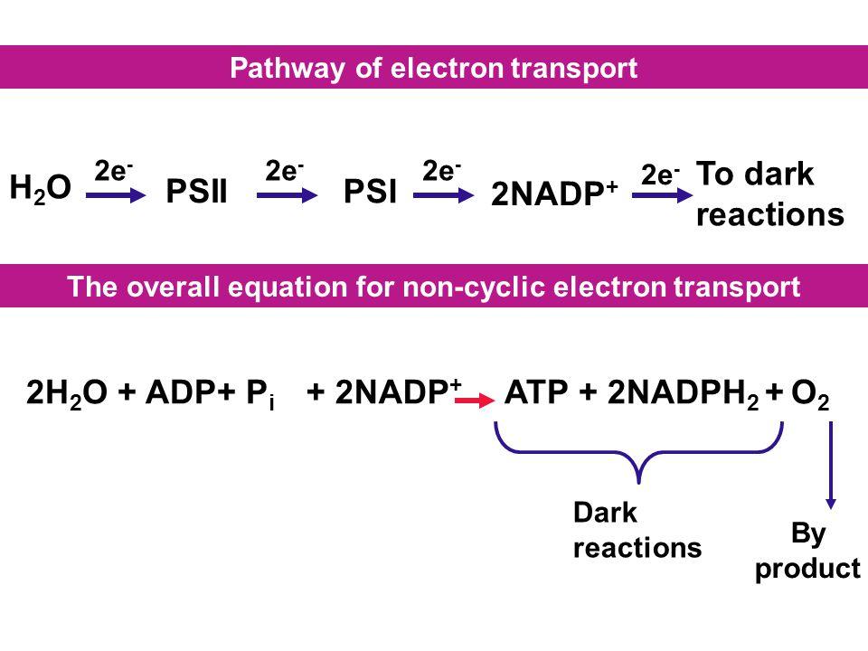 PSII PSI To dark reactions H2O 2NADP+ 2H2O + ADP+ Pi + 2NADP+