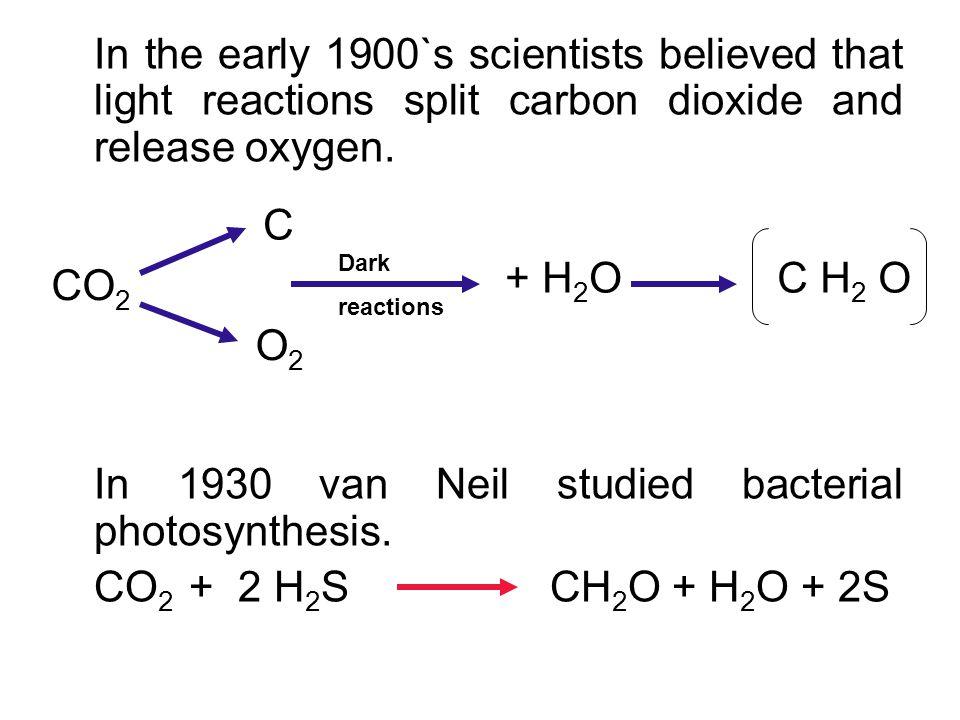 In 1930 van Neil studied bacterial photosynthesis.