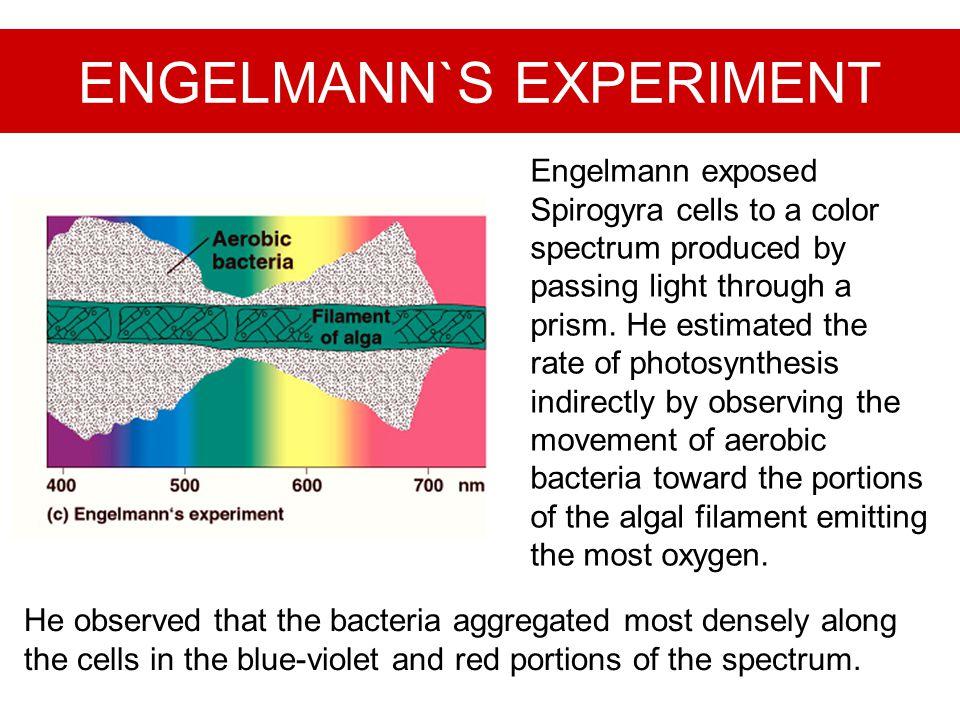 ENGELMANN`S EXPERIMENT