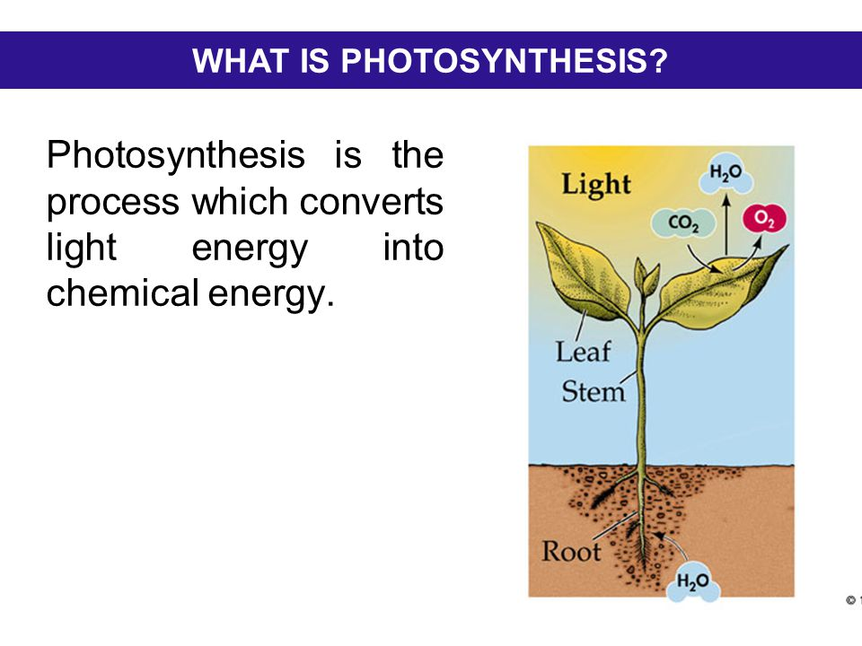 what is photsynthesis Definition: photosynthesis is the process by which green plants and some other organisms use sunlight to synthesize foods from.