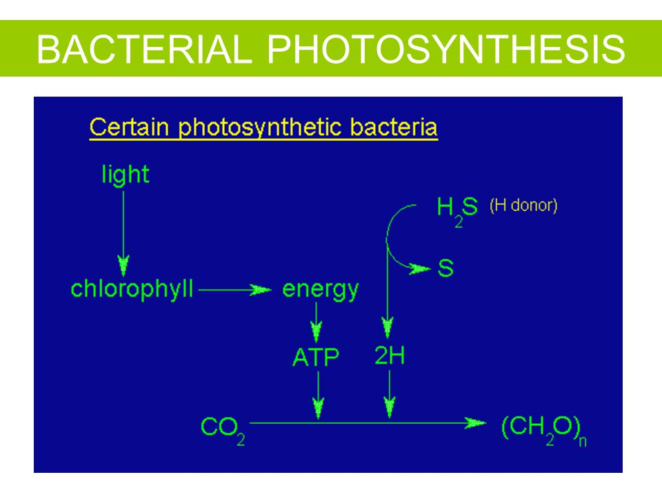 BACTERIAL PHOTOSYNTHESIS
