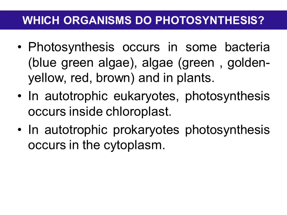 WHICH ORGANISMS DO PHOTOSYNTHESIS