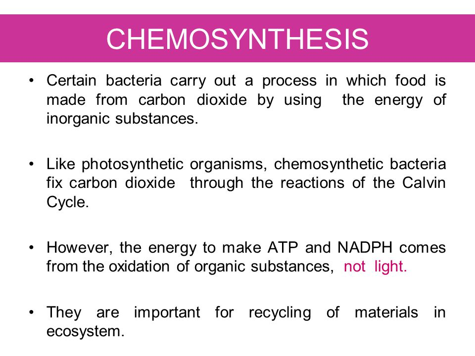 CHEMOSYNTHESIS Certain bacteria carry out a process in which food is made from carbon dioxide by using the energy of inorganic substances.