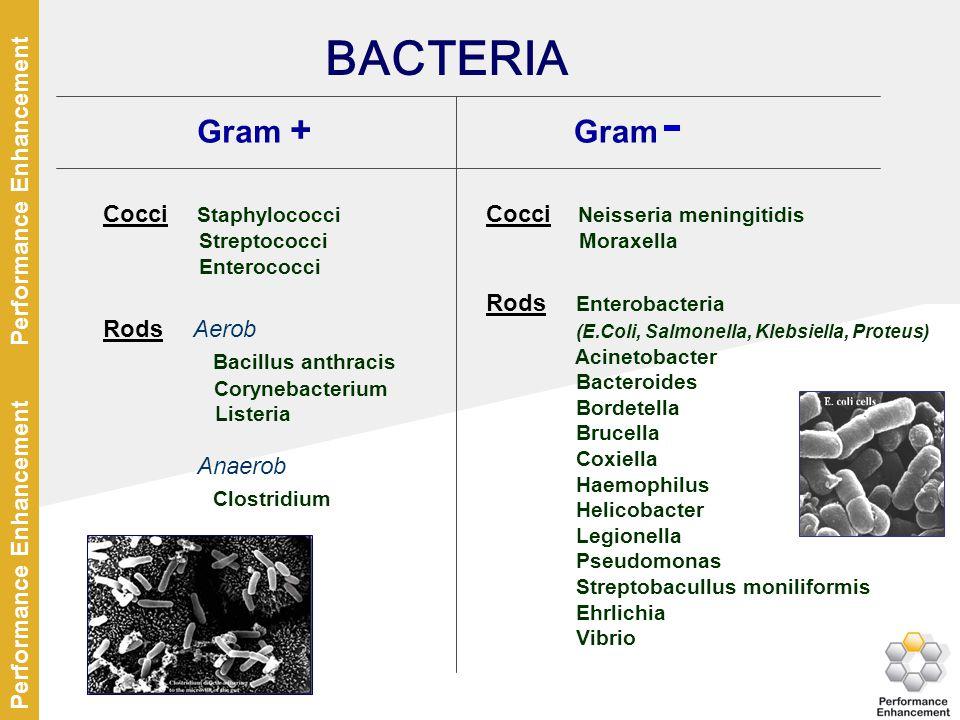 BACTERIA Gram + Gram Bacillus anthracis Anaerob Clostridium