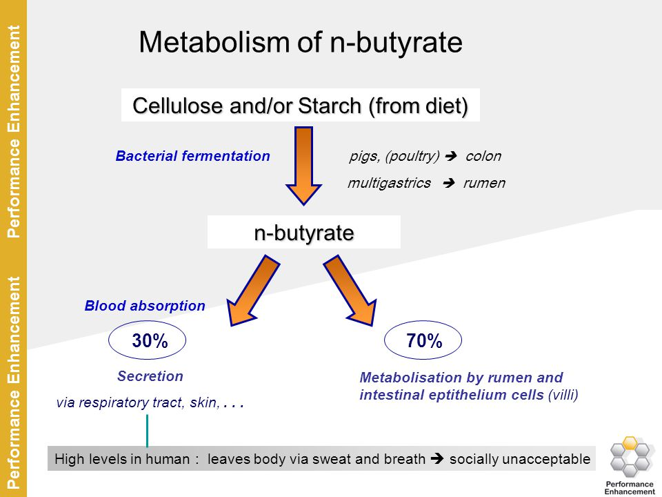 Metabolism of n-butyrate