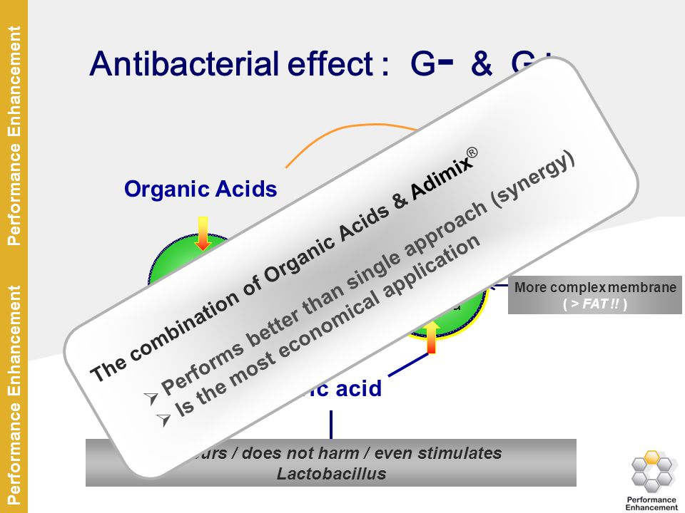 Antibacterial effect : G- & G+
