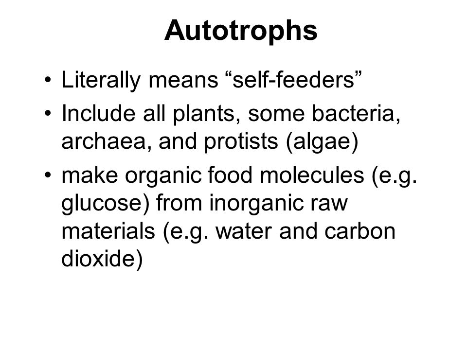 Do Photoautotrophs Make Their Own Food By Photosynthesis