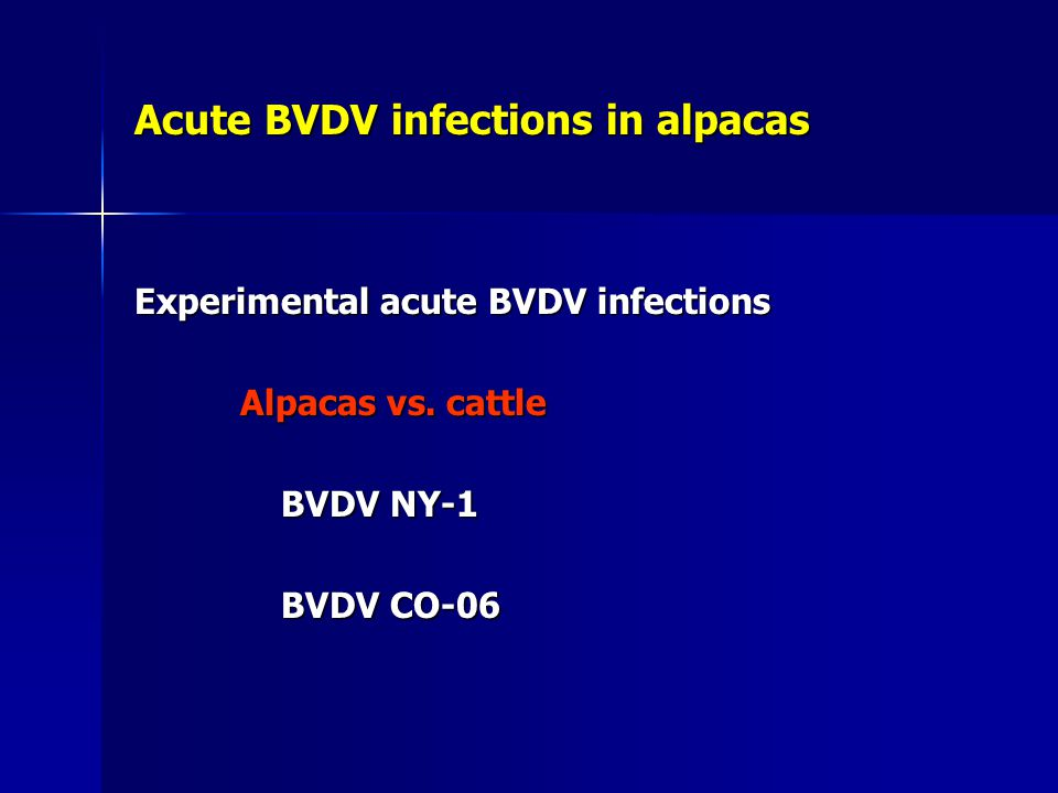 Acute BVDV infections in alpacas