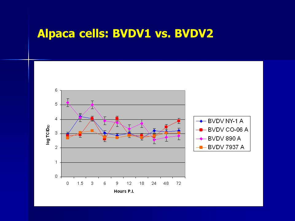 Alpaca cells: BVDV1 vs. BVDV2