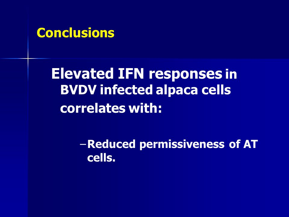 Elevated IFN responses in BVDV infected alpaca cells