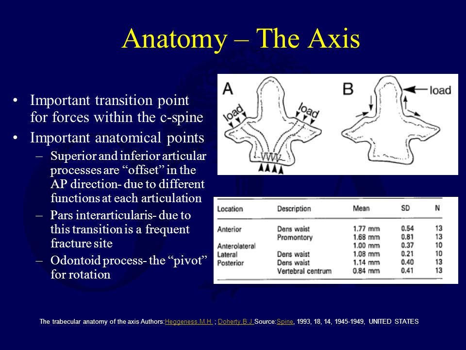 Anatomy – The Axis Important transition point for forces within the c-spine. Important anatomical points.