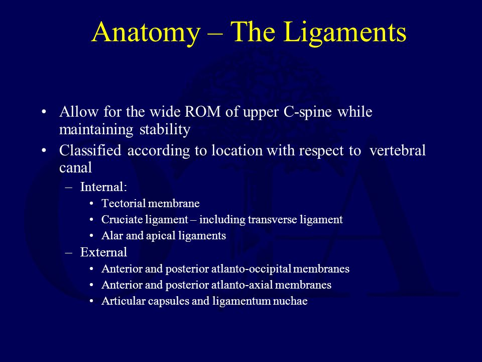 Anatomy – The Ligaments