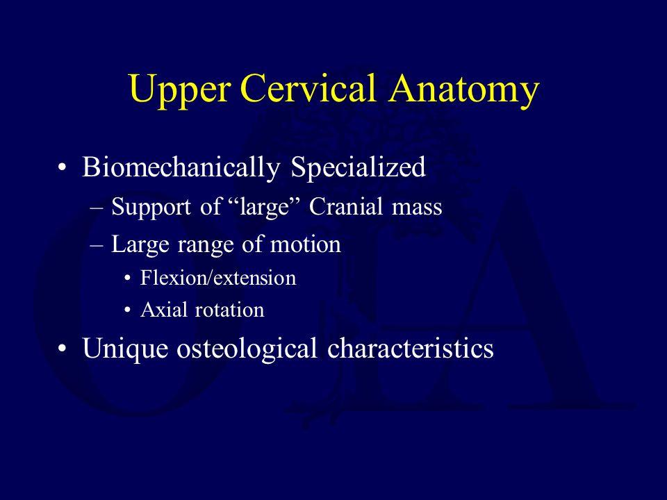 Upper Cervical Anatomy