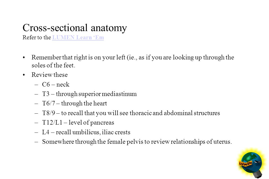 Cross-sectional anatomy Refer to the LUMEN Learn 'Em