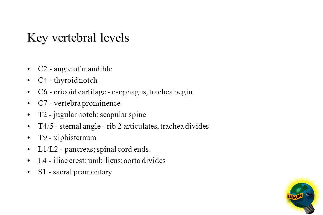 Key vertebral levels C2 - angle of mandible C4 - thyroid notch