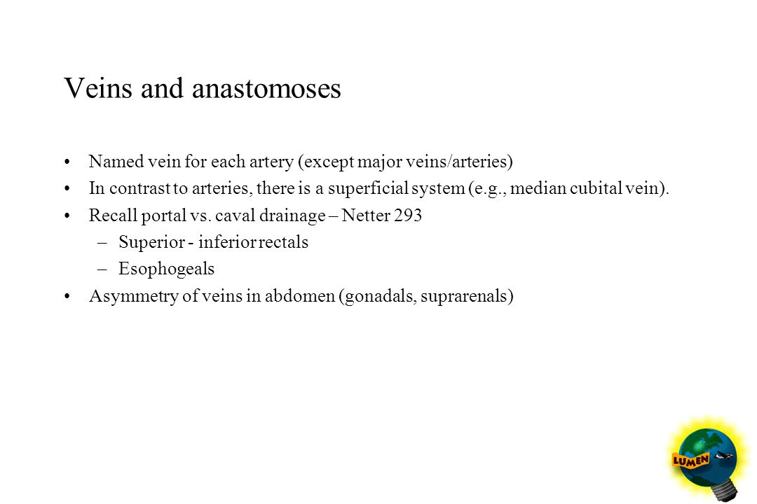 Veins and anastomoses Named vein for each artery (except major veins/arteries)