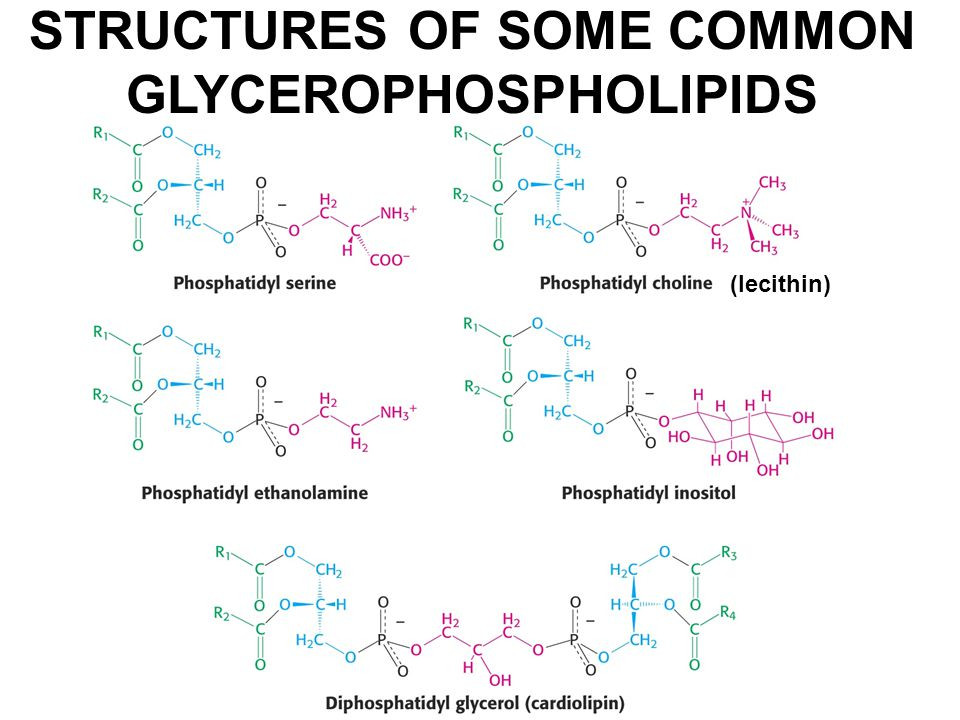 STRUCTURES OF SOME COMMON GLYCEROPHOSPHOLIPIDS