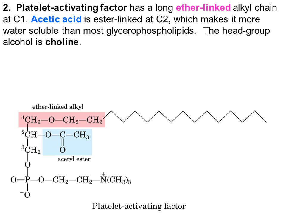 2. Platelet-activating factor has a long ether-linked alkyl chain at C1.