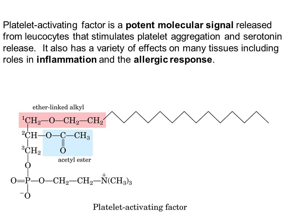 Platelet-activating factor is a potent molecular signal released from leucocytes that stimulates platelet aggregation and serotonin release.