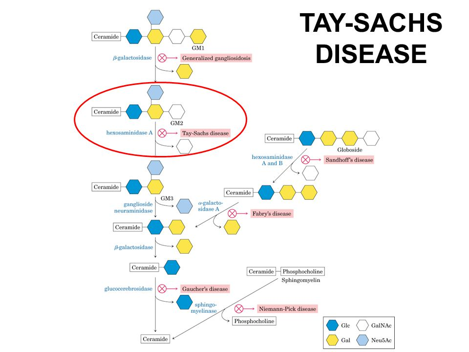 how to say tay-sachs disease
