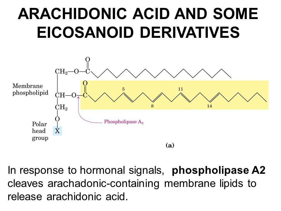 ARACHIDONIC ACID AND SOME EICOSANOID DERIVATIVES