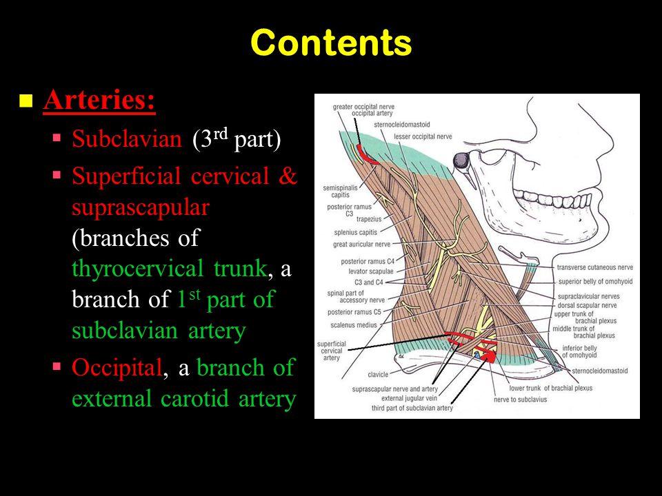 Contents Arteries: Subclavian (3rd part)