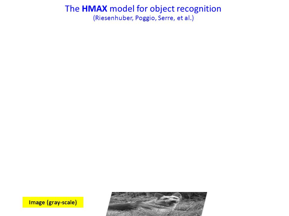The HMAX model for object recognition
