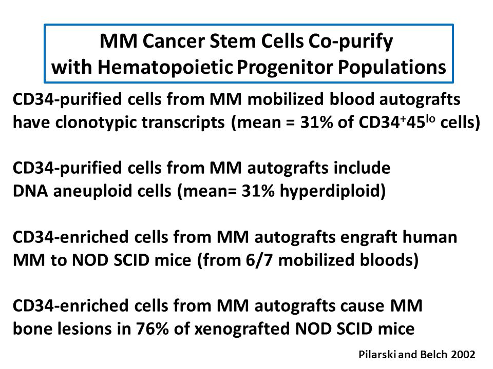MM Cancer Stem Cells Co-purify
