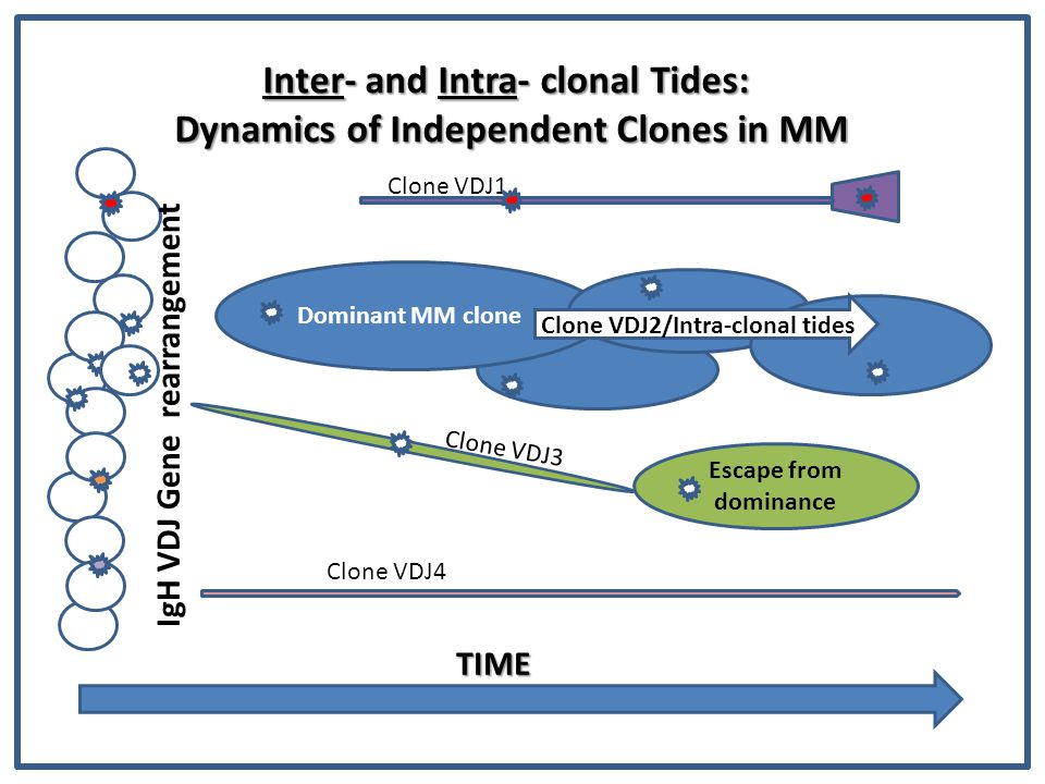 Inter- and Intra- clonal Tides: Dynamics of Independent Clones in MM