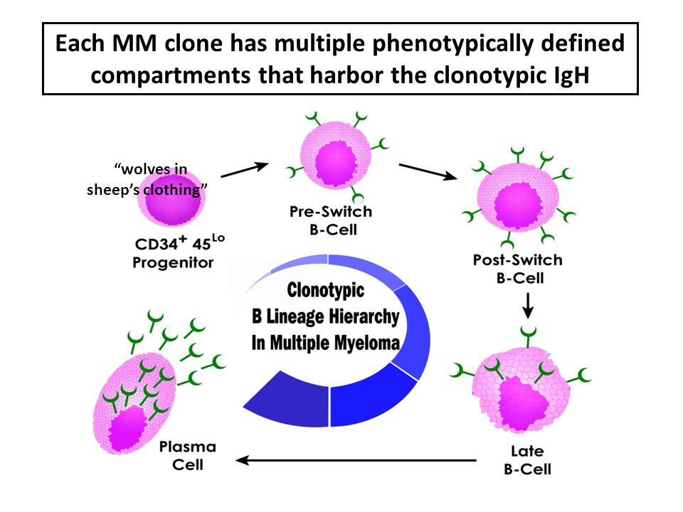 Each MM clone has multiple phenotypically defined compartments that harbor the clonotypic IgH