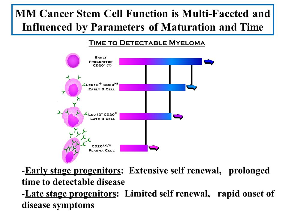 MM Cancer Stem Cell Function is Multi-Faceted and Influenced by Parameters of Maturation and Time