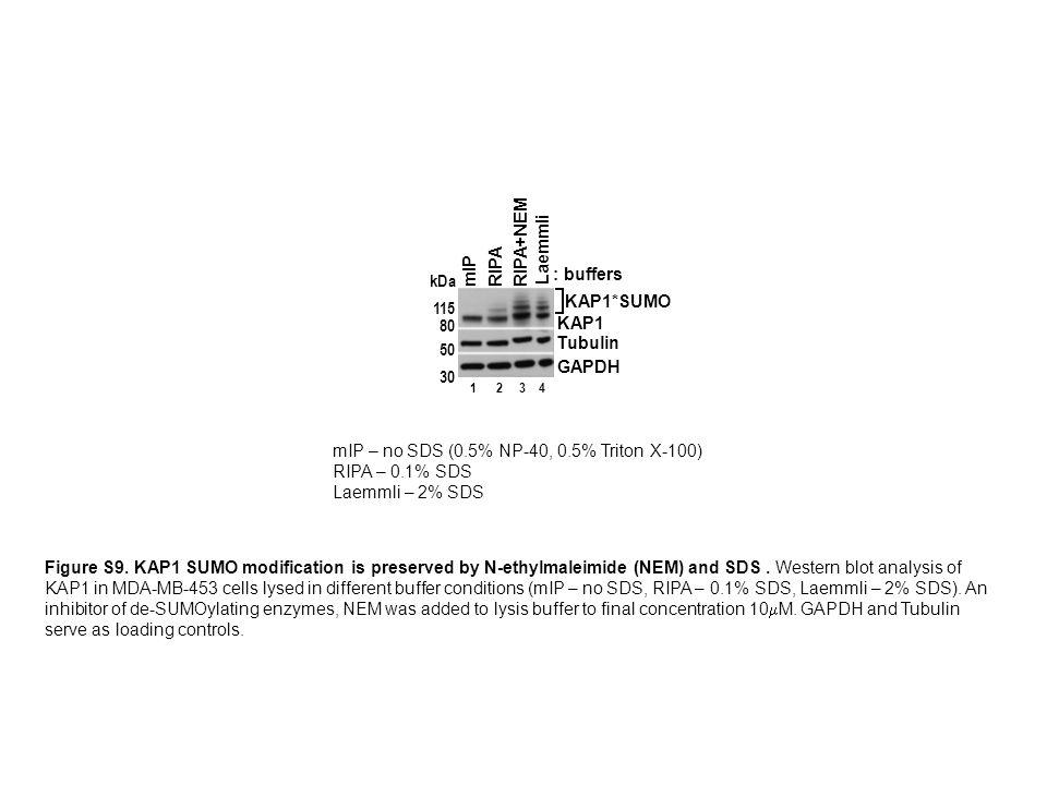 mIP – no SDS (0.5% NP-40, 0.5% Triton X-100) RIPA – 0.1% SDS