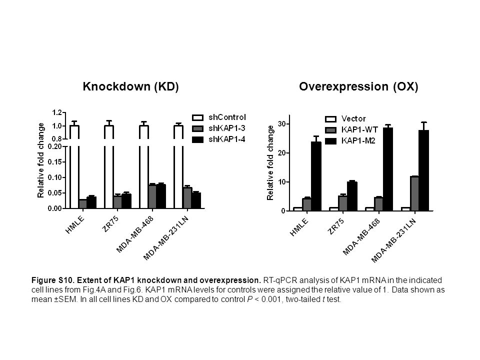 Knockdown (KD) Overexpression (OX)