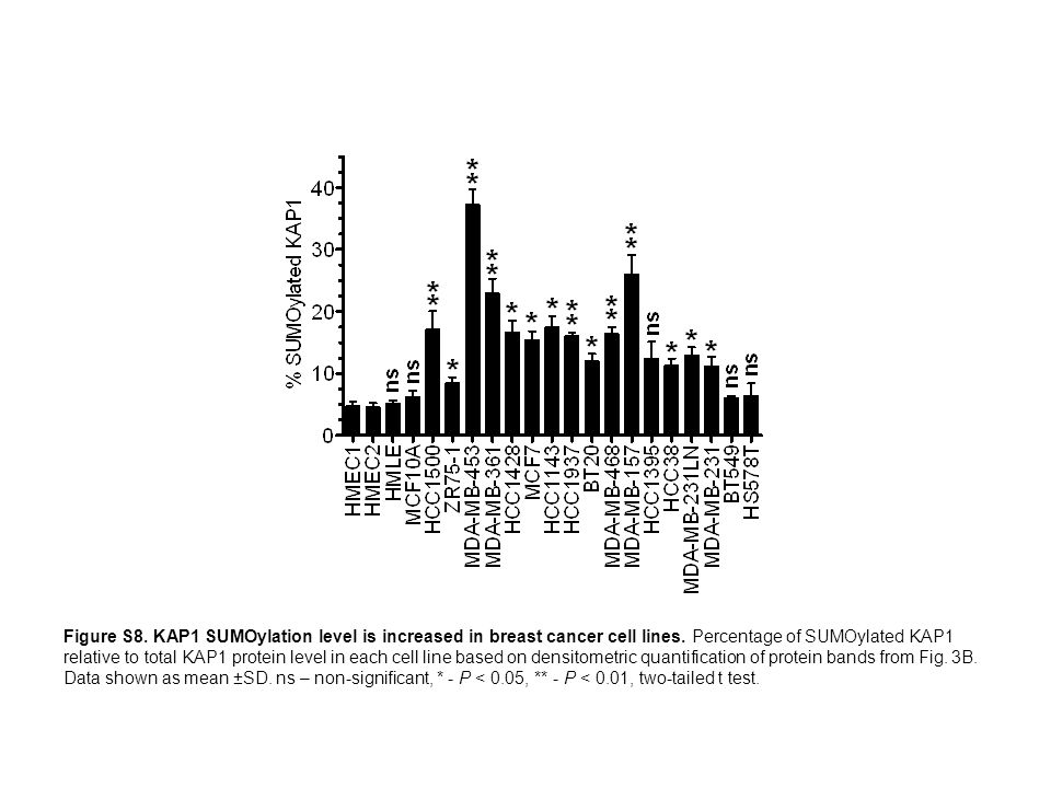 Figure S8. KAP1 SUMOylation level is increased in breast cancer cell lines.